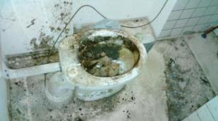 Desinfektion einer Toilette